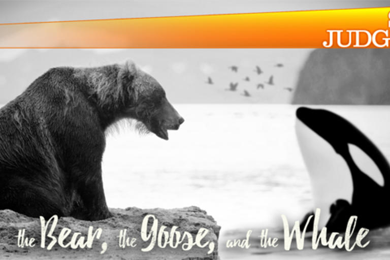 The Bear, The Goose and the Whale | Snap Judgment podcast